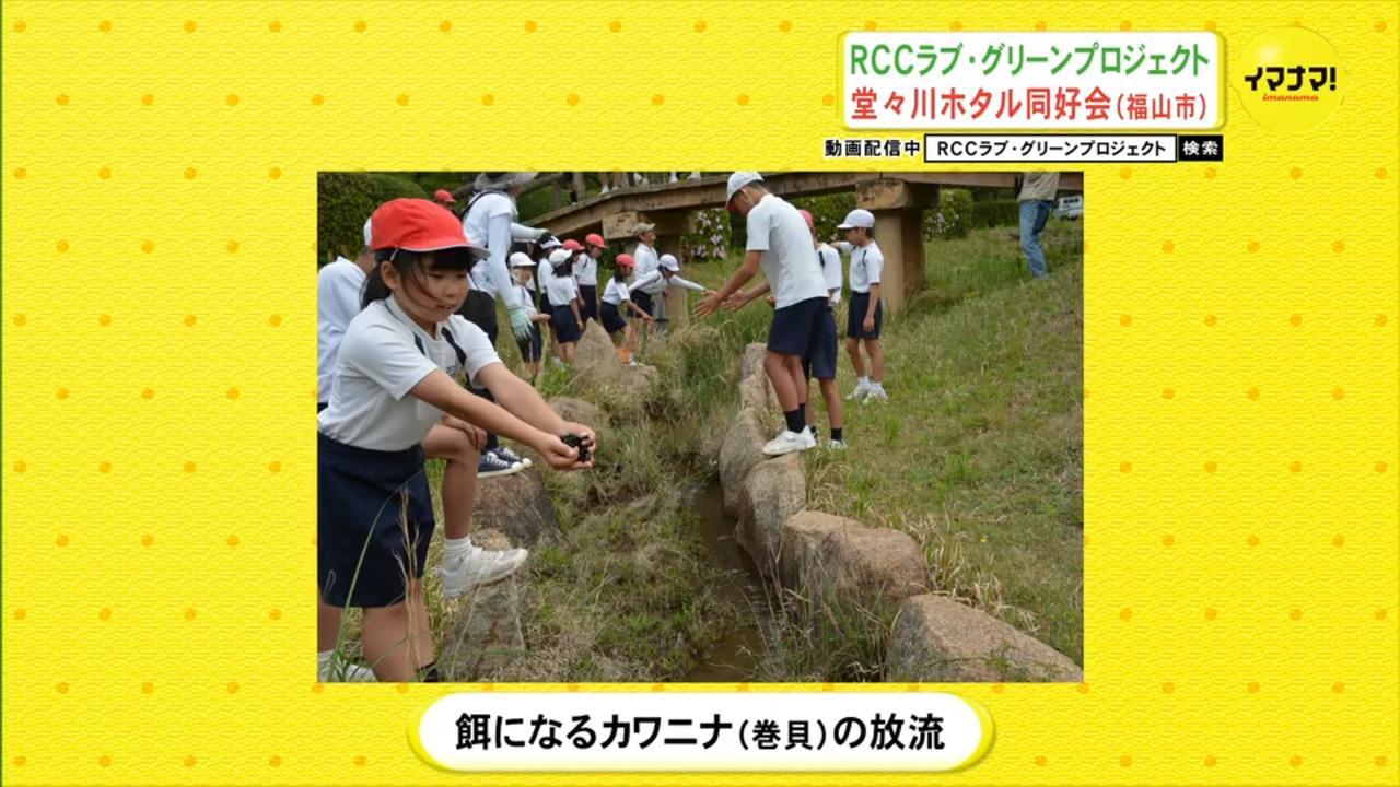 RCCラブ・グリーンプロジェクト堂々川ホタル同好会(福山市)