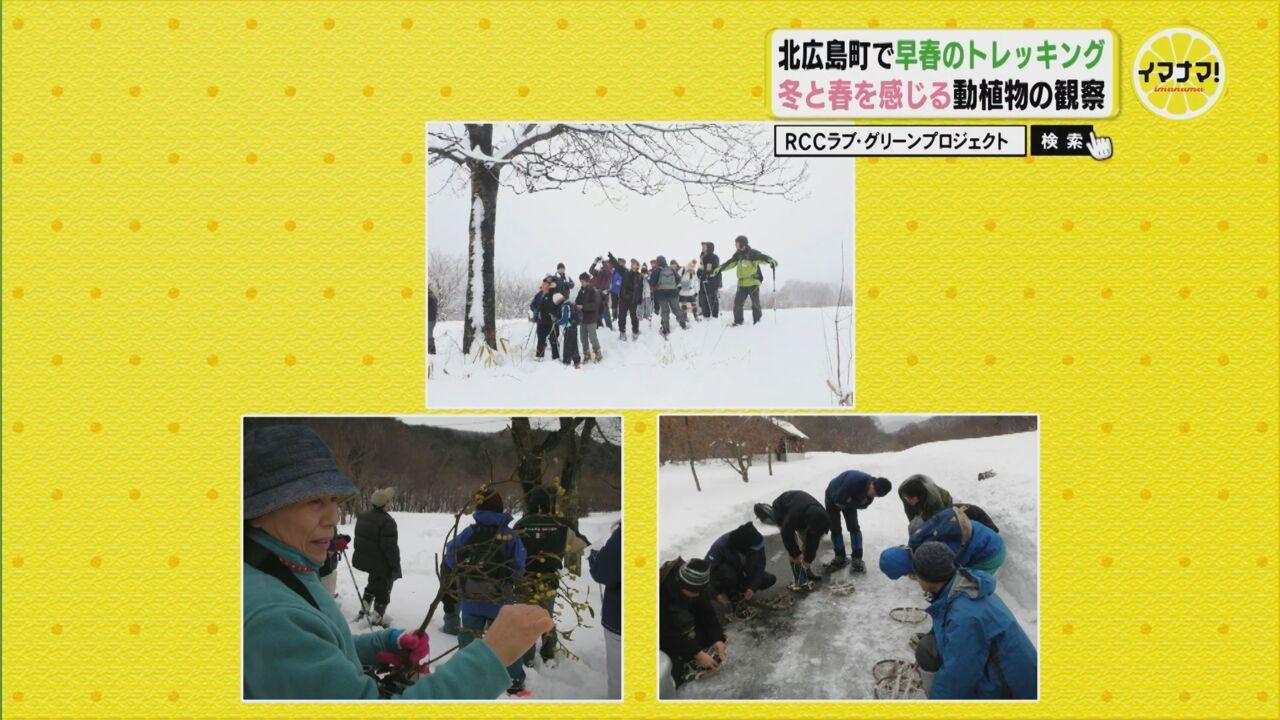 北広島で早朝のトレッキング 冬と春を感じる動植物の観察
