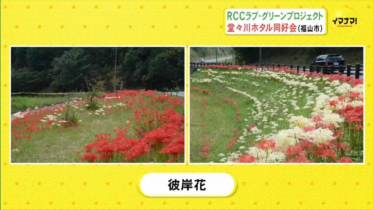 RCCラブ・グリーンプロジェクト 堂々川ホタル同好会(福山市)