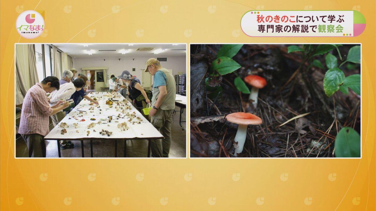 秋のきのこについて学ぶ専門家の解説で観察会