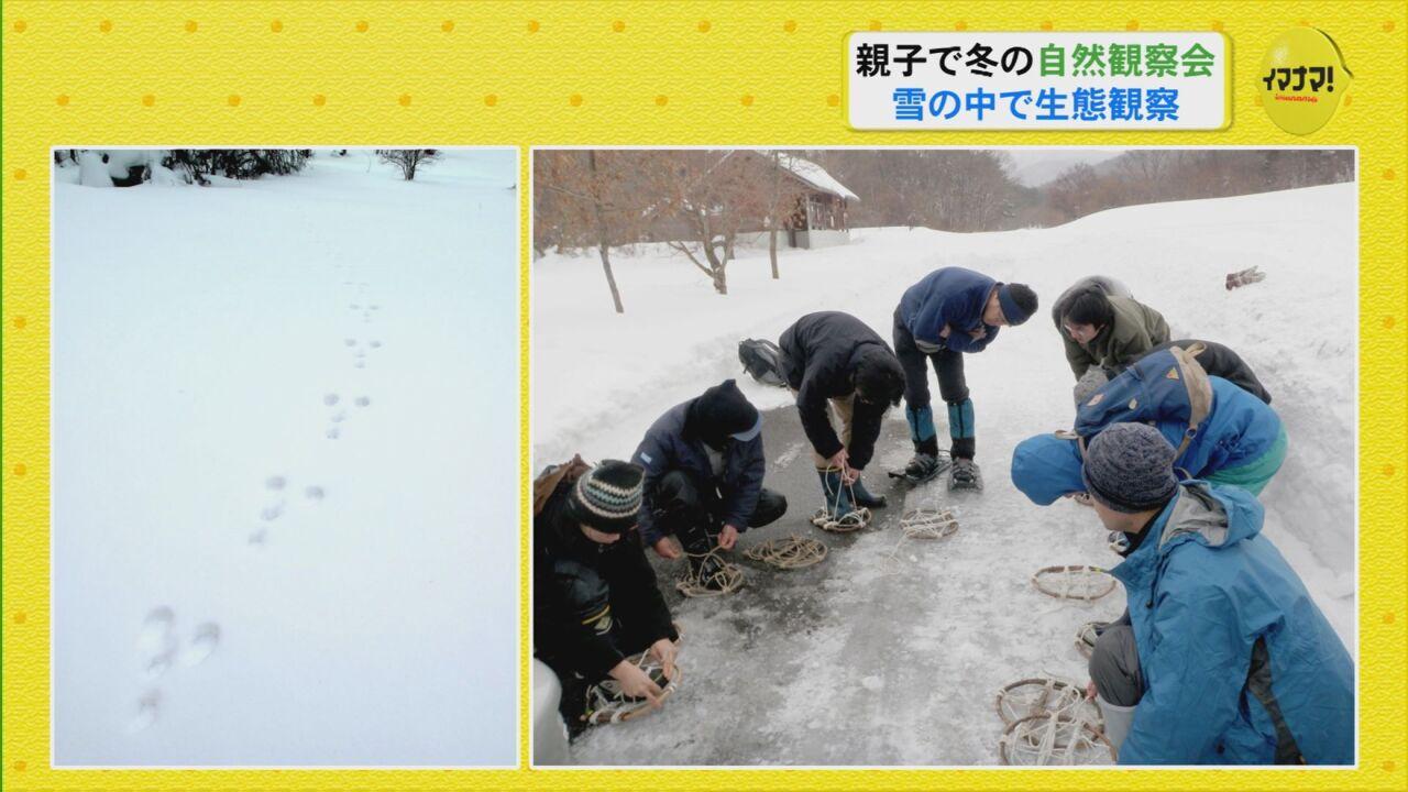 親子で冬の自然観察会 雪の中で生態観察