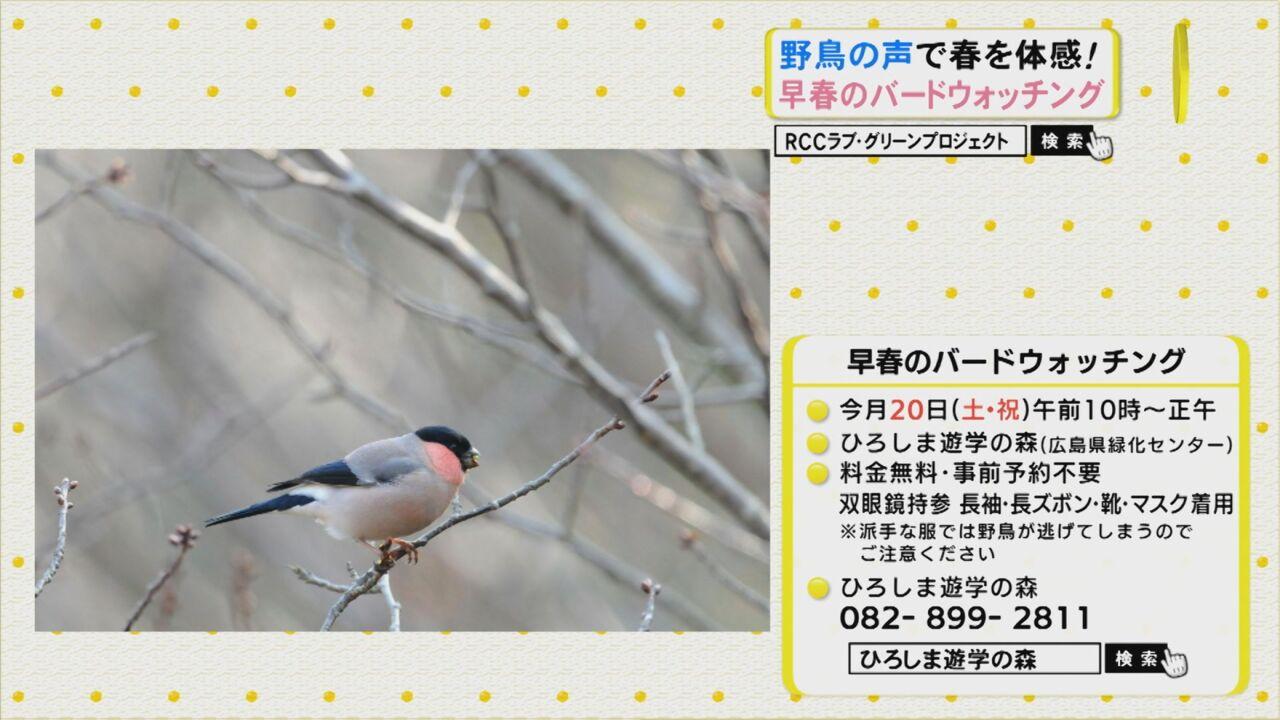 野鳥の声で春を体感!早春のバードウォッチング