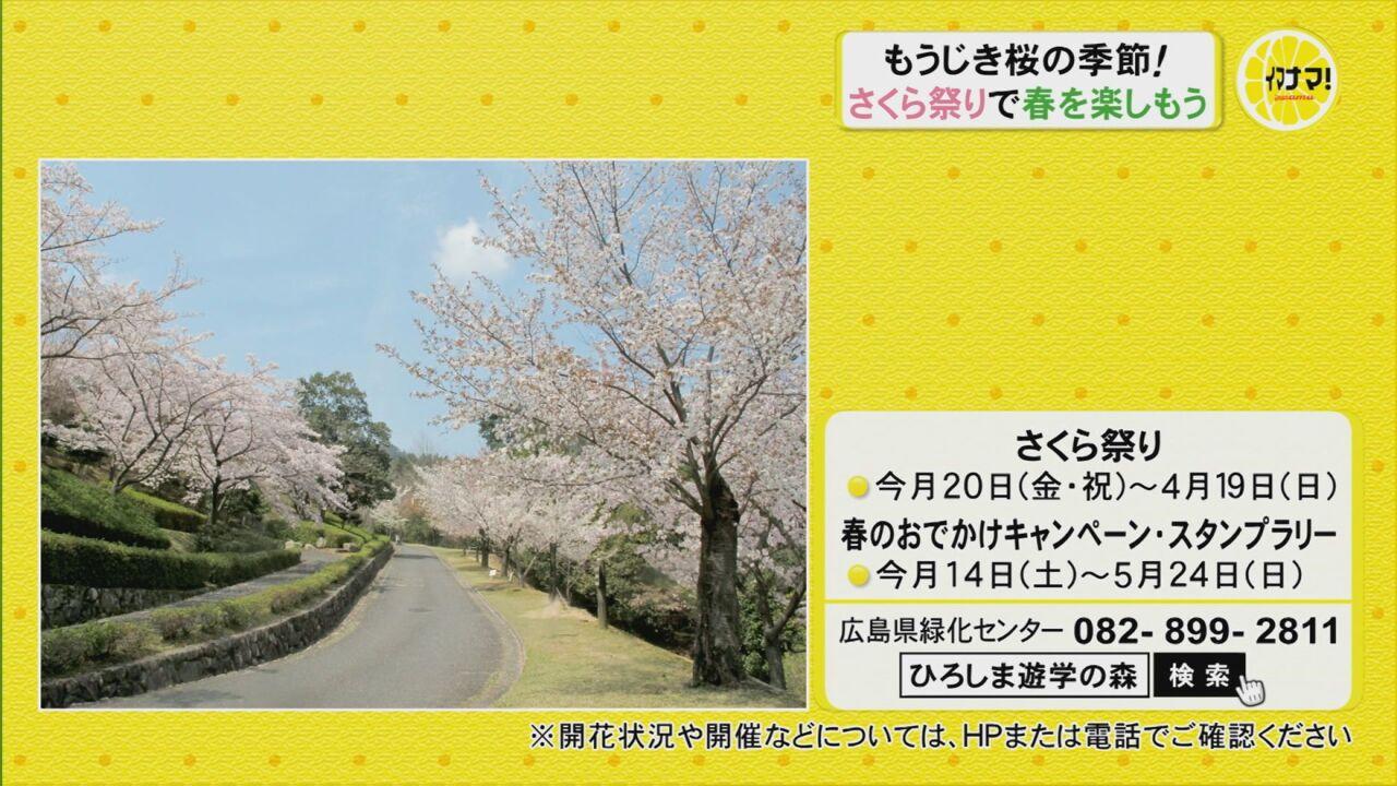 もうじき桜の季節!さくら祭りで春を楽しもう
