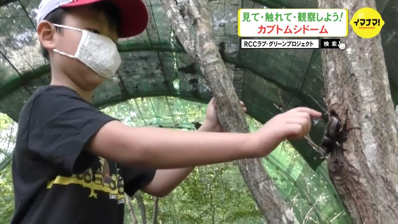 見て・触れて・観察しよう!カブトムシドーム