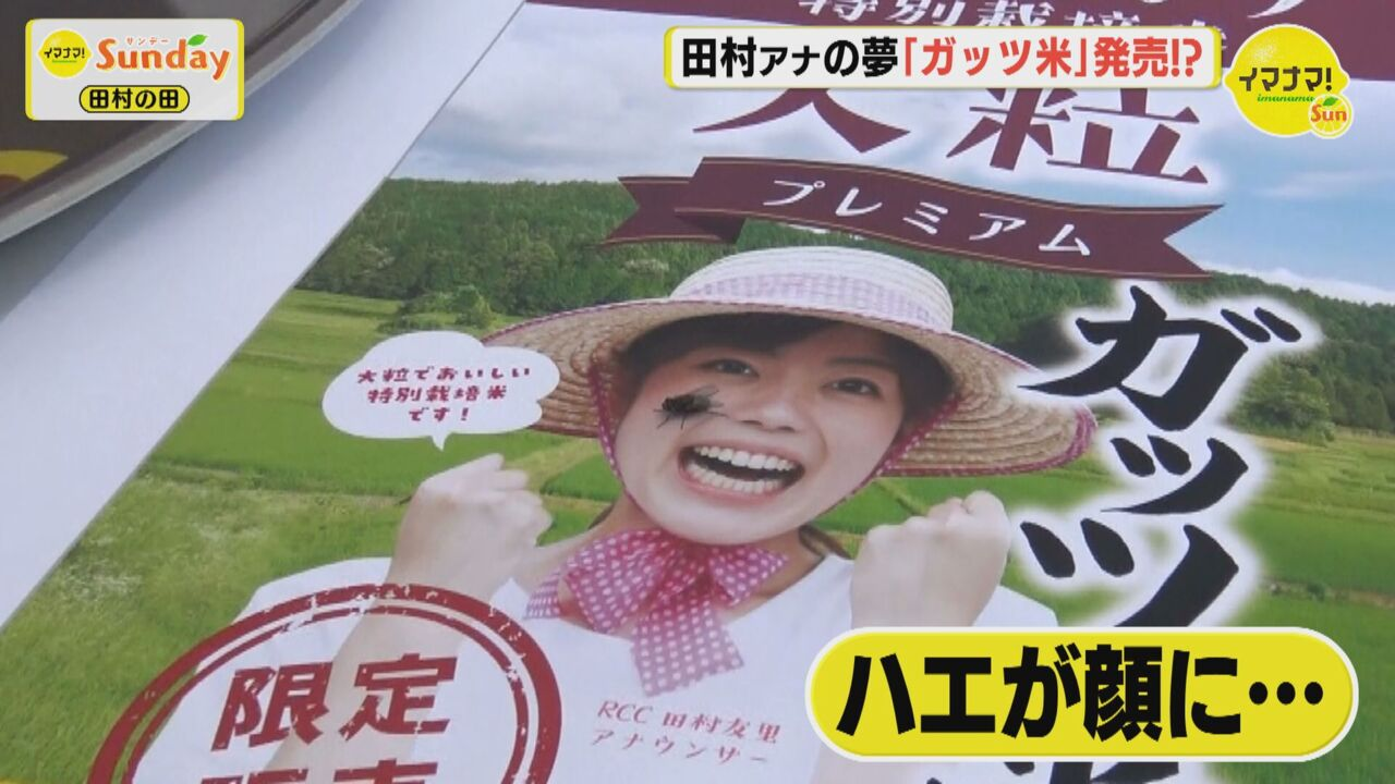 田村の田☆ガッツ米販売へ!!