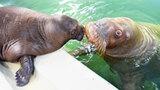 <おたる水族館 楽しい仲間たち>母親の偉大さ