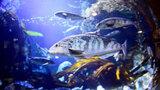 <おたる水族館 楽しい仲間たち>適度なストレス 環境に変化与え健康維持