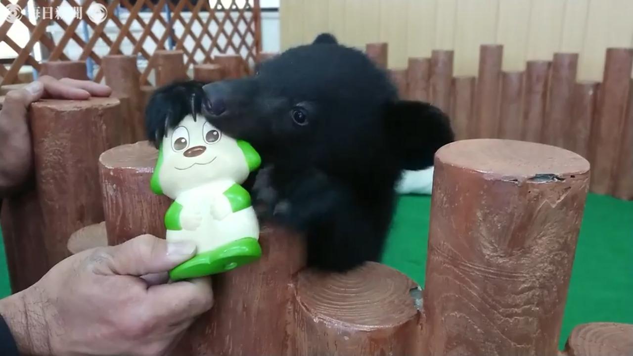 名前 志村 動物園